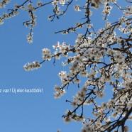 Beköszönt a csillagászati tavasz – új év, új élet