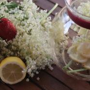 Májusi finomságok – bodza és akácvirág