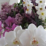Áprilisi havazás – orgona, nárcisz és gyöngyvirág illattal